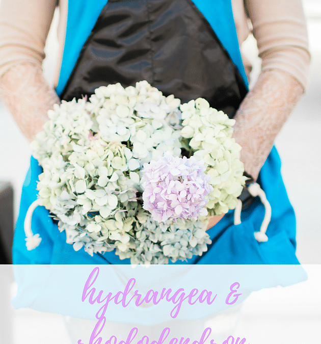 Hydrangea and Rhododendron: How to Care for Your Plants