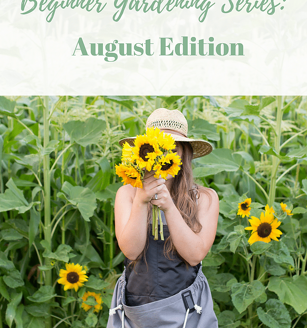 Beginner Gardening Series: August Edition