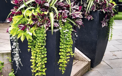 How to Have Beautiful Potted Plants