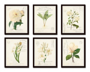 botanical print collection